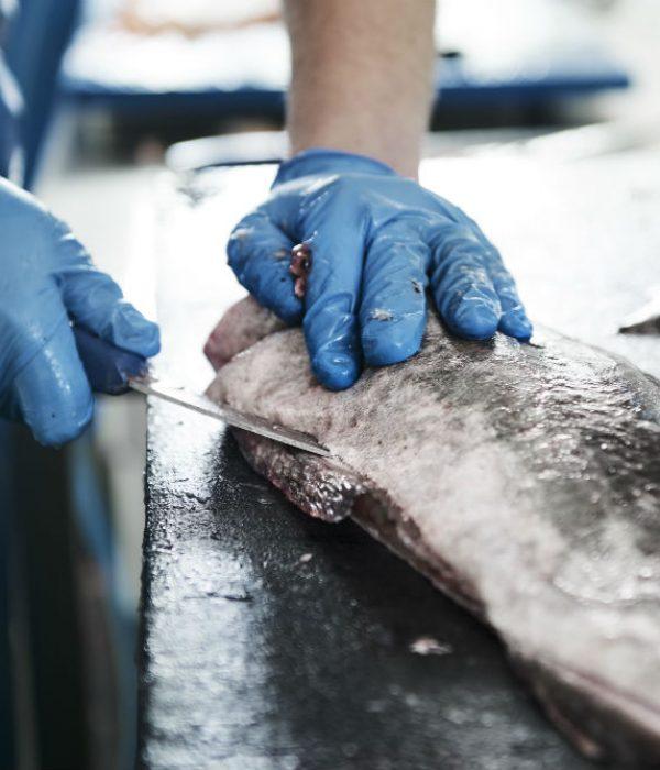 fish_preparation
